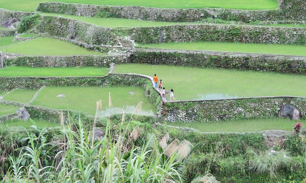 Ein einheimische Familie spaziert durch die Reisterrassen von Hapao