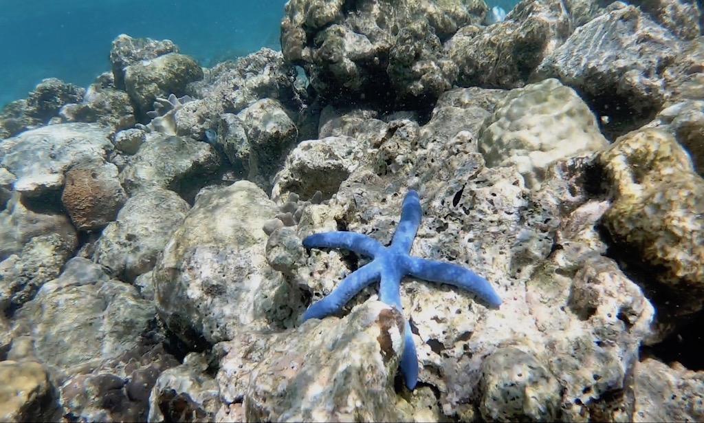Ein blauer Seestern im Wasser