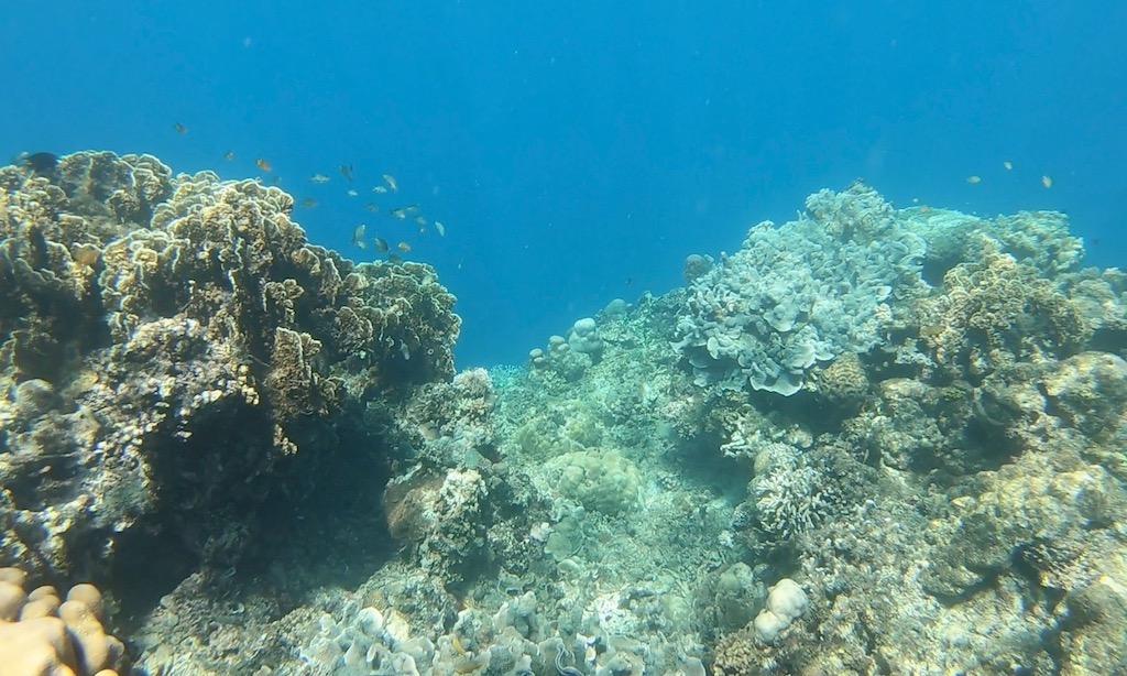 Kleine Fische am Riff in Ronda Moalboal