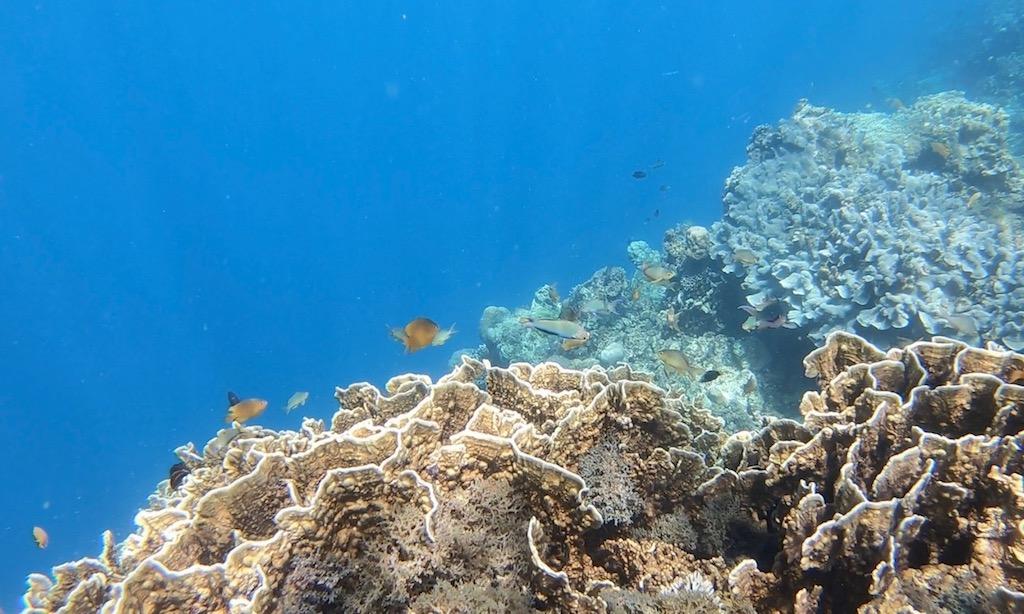 Kleiner Fischschwärme am Riff in Ronda, Cebu