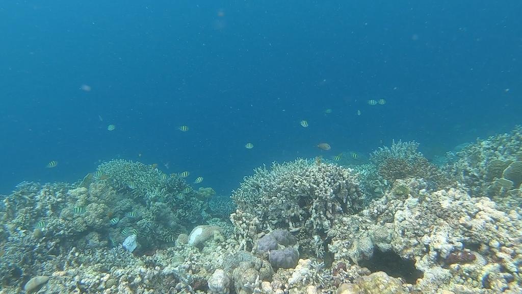 Kleine Fische am Riff des White Beaches