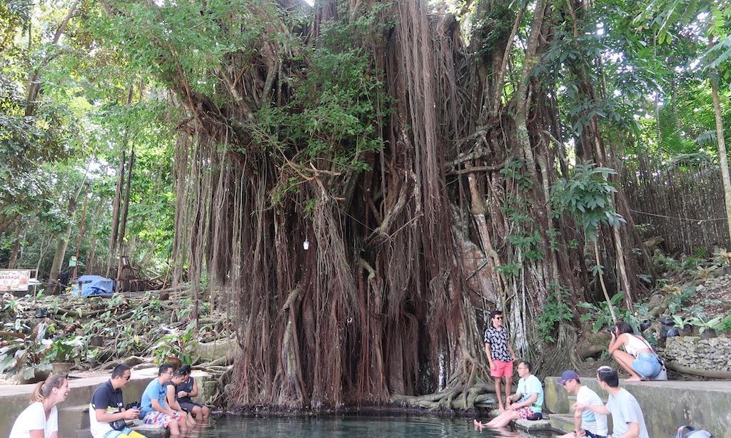 Touristen baden ihr Füße am Baum des Balate Trees