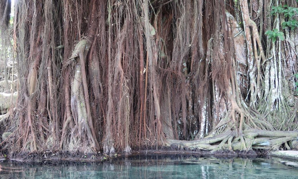 Der Balate Tree in Siquijor mit Wasserbecken davor