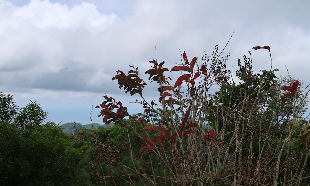 Der Blick auf Siquijor vom Mount Bandilaan ist aufgrund der hochgewachsenen Pflanzen und Bäume versperrt